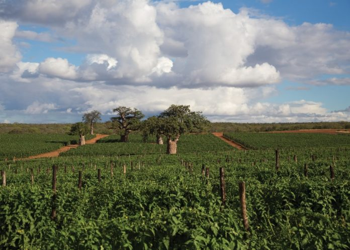 Conducive conditions for investors in Limpopo Province | Global